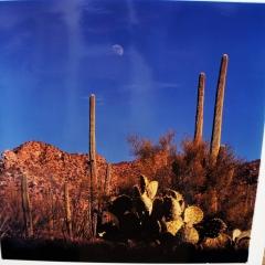 Saguaro   $75